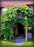 Oregon Hill Winery by GlassHouse-1
