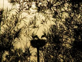 Storks behind Branches by CHritzel