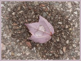 Leaf Puddle by pange