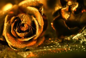 Golden rose by jagerion