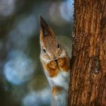 squirrel by fly10