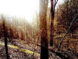Sunbeam Through Trees by ThEquivalency