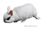 White Rabbit 3 PNG Stock by TrisStock