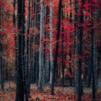 individuals by ildiko-neer