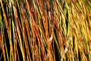 Pine Needles by TomFawls