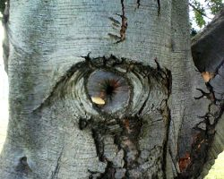 A tree looking at you by chioo