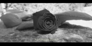 Black Rose by RazielMB-PhotoArt