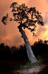 tree with pink sky by lamorth-the-seeker