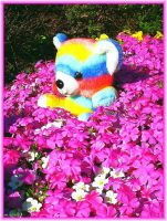 A bed of Flowers for my Rainbow - Teddy by Villa-Chinchilla