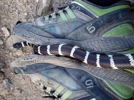 King Snake : on my feet by ClymberPaddler