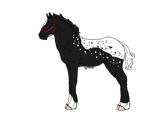 Appaloosa Draft - 15 Points - Closed!! by slayingallhumans