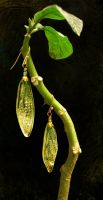 cicada wing earrings - green and gold by ceruleanvii