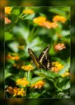 Butterfly in Flowers by Deirdre-T