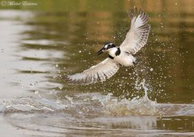 Making a splash by MorkelErasmus