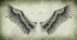 Condor's Wings by Chechist