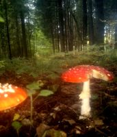 Mushrooms by rihosk