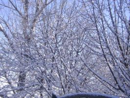Snow in the Branches 2 by Magoo-Tora
