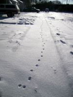 Snow kitty tracks 2 by Tragic-Ashes