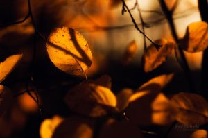 Autumn Tones by JoniNiemela