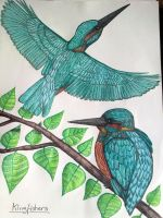 Kingfishers by Spam5192