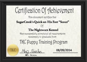 Scout PTP Certificate by AixaRawr