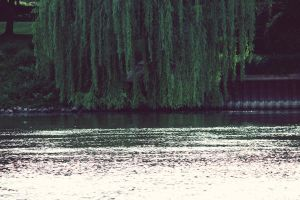 hide beneath the willow by fotomademoiselle