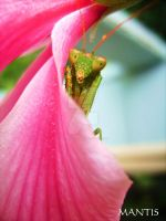 Mantis by B-L-Photography