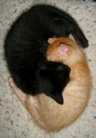 Yin Yang Kitties by Phaedris