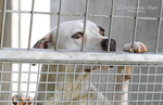 East Valley Animal Shelter 7 by Deliquesce-Flux
