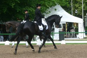 Dressage Trot Stock 07 by LuDa-Stock