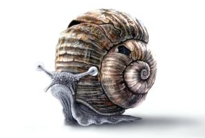 Cute Snail by RetroLin