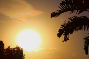 Wallpaper Sunset Palm Trees by Dynose