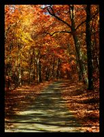 autumn road by wroquephotography