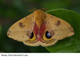 Moth2-STOCK by Rainny-Stock