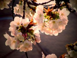 Blossom Tree by LucyLilyPad