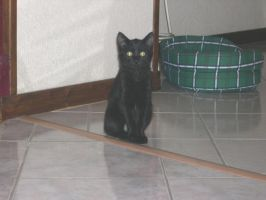 My little cat Isis by Sweetlylou