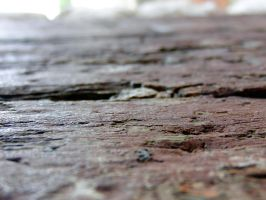 Old wood close up by akenator