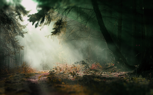 Spooky Forest - Wallpaper by dazalicious