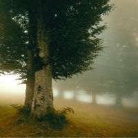 pure silent by incisler