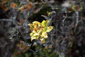 In web through cracks by gors