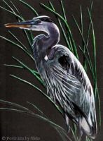 Great Blue Heron by stalksthedawn