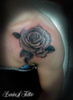 Rose Tattoo by DanloS