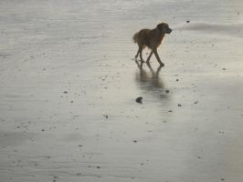 Allie on the beach by OleMid2007