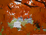 Through maple by seeker-of-revelation