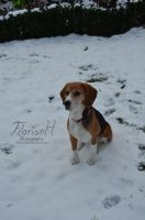 My dog in the snow ^^ by D3PRO