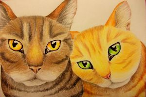 Brambleclaw and Squirrelflight by x----eLLiE----x
