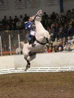 Lipizzaner Stallions - Jumping by QuentinWolf