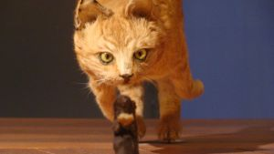 BC Naturalis- Domestic cat 2 by Lot1rthylacine