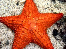 Starfish II by xdeeplake