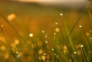 Morning dew by paaniprezes